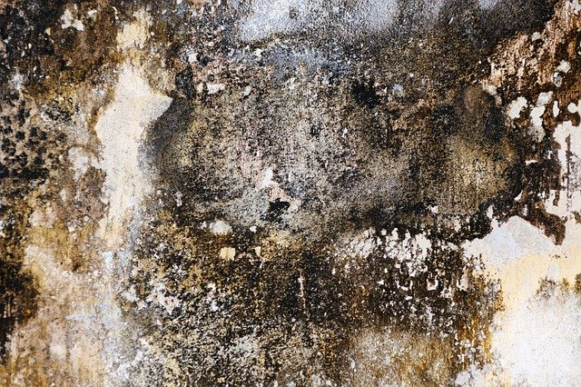Mold Toxicity What It Looks Like And To Do About