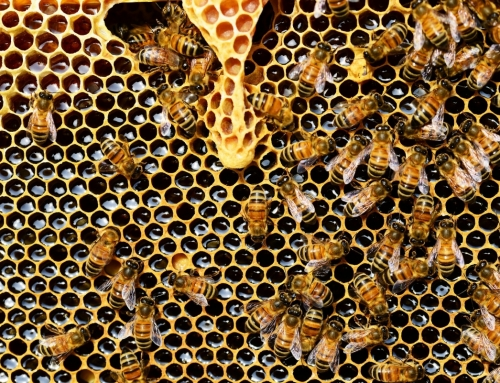 Health Benefits of Bee Propolis