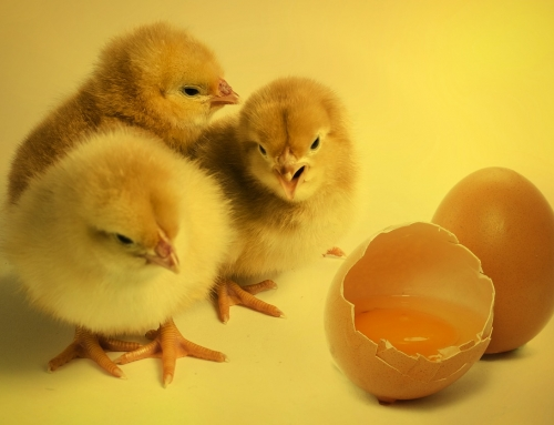 Neurotransmitter Imbalance and Depression: Chicken or the Egg?