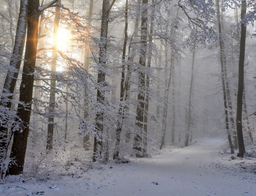 The Mood-Boosting Winter Vitamin